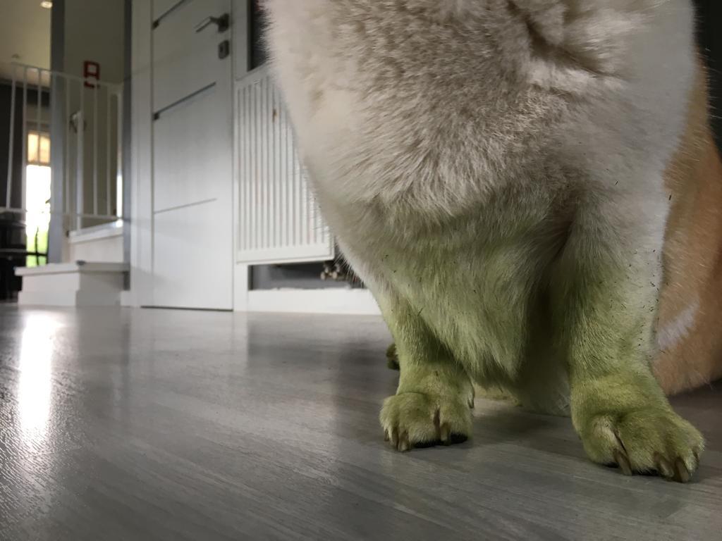 Zielono mi! Czyli koszenie trawy.