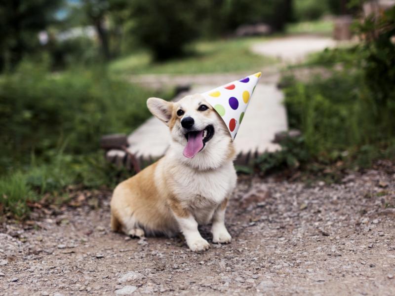 Moje 3 urodziny :)